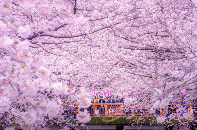 sakura-cherry-blossom-drone-photography-danilo-dungo-japan-1