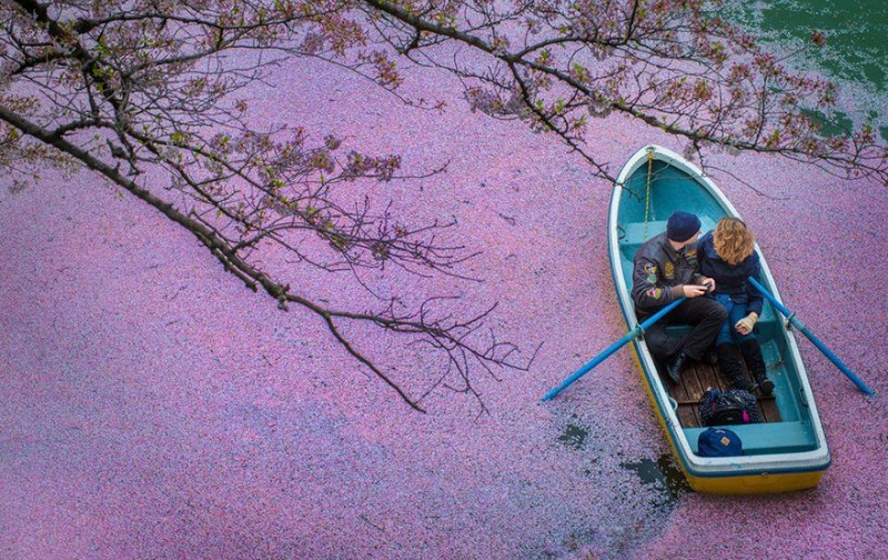 sakura-cherry-blossom-drone-photography-danilo-dungo-japan-13