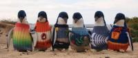 Каждому пингвину по свитеру