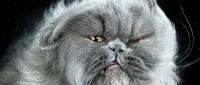 Shake cats – как кошки стряхивают воду