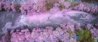 Сакура в цвете